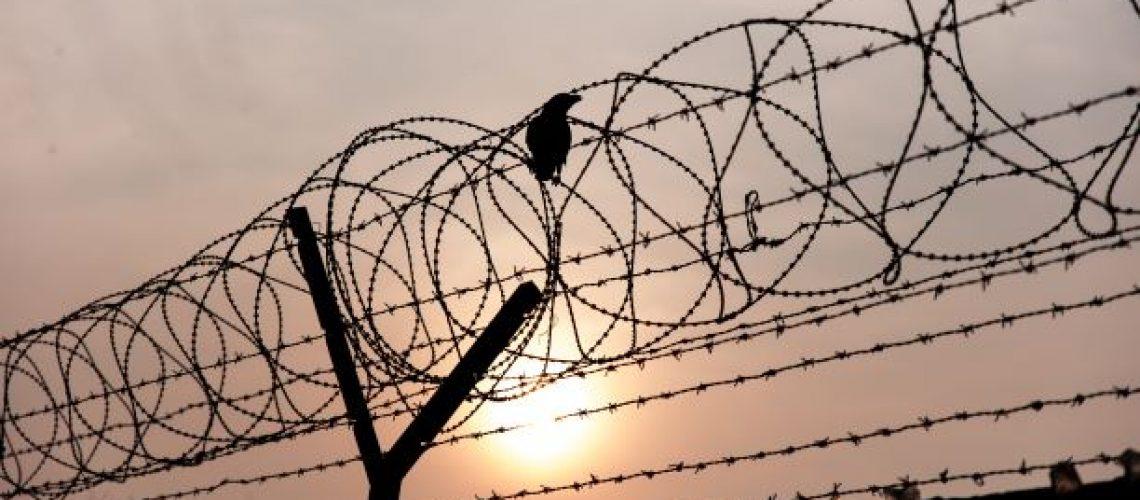 barbed wire & bird